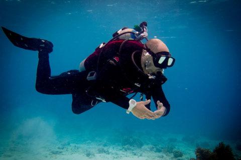 Open Water Scuba Diver